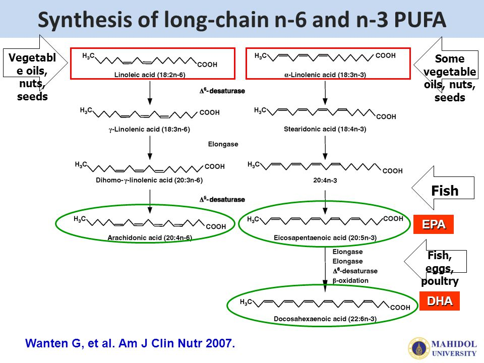 Synthesis of long-chain n-6 and n-3 PUFA