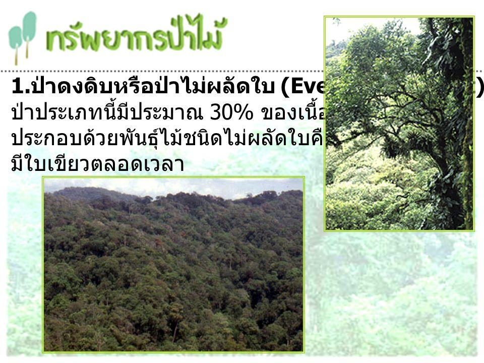 1.ป่าดงดิบหรือป่าไม่ผลัดใบ (Evergreen Forest)