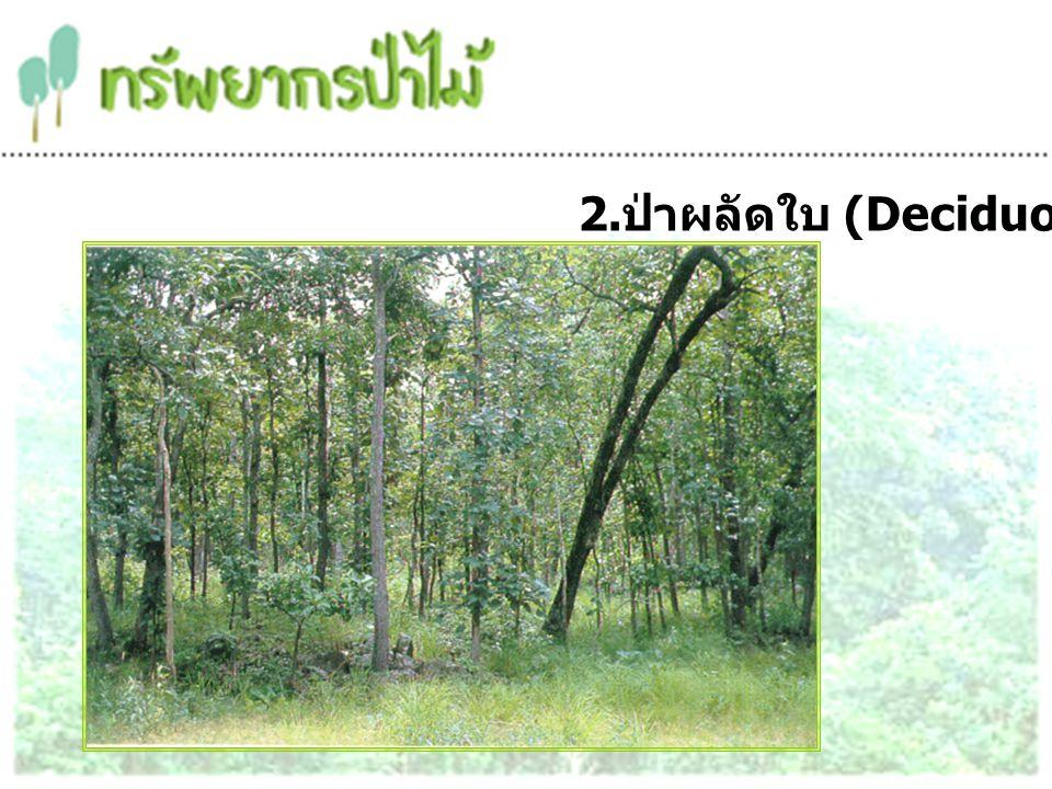 2.ป่าผลัดใบ (Deciduous Forest)