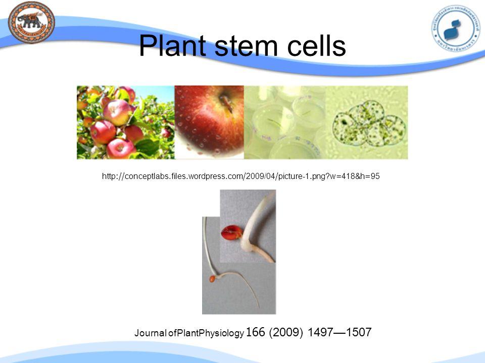 Plant stem cells Journal ofPlantPhysiology 166 (2009) 1497—1507