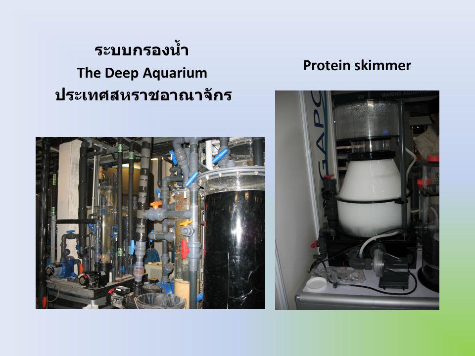 ระบบกรองน้ำ The Deep Aquarium ประเทศสหราชอาณาจักร Protein skimmer