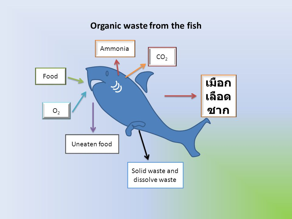 Organic waste from the fish