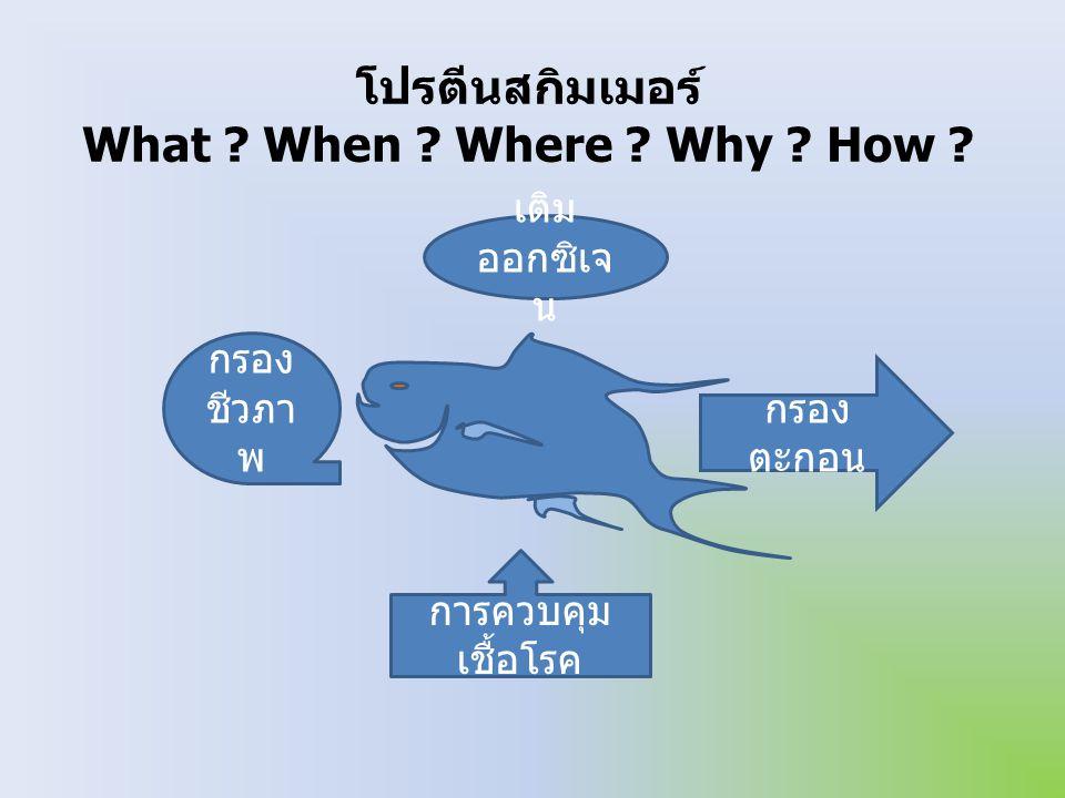 โปรตีนสกิมเมอร์ What When Where Why How