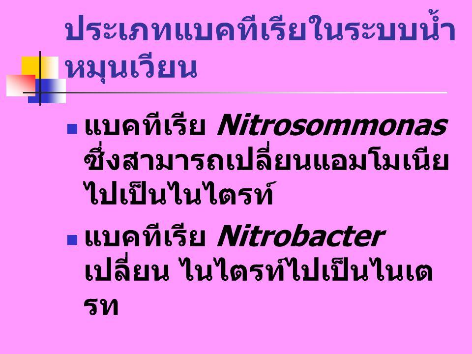 ประเภทแบคทีเรียในระบบน้ำหมุนเวียน