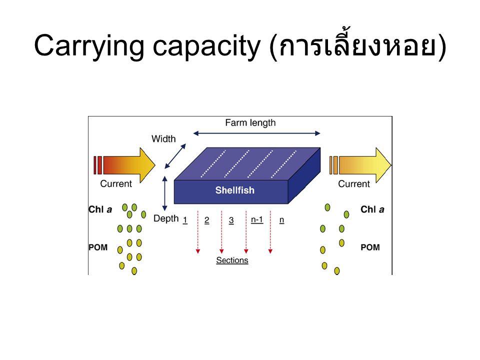 Carrying capacity (การเลี้ยงหอย)