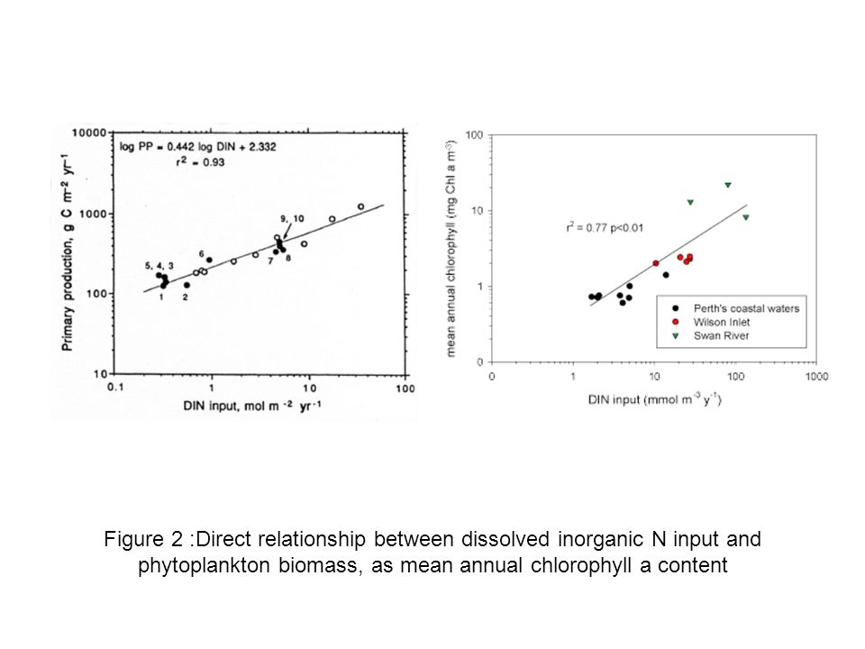 Figure 2 :Direct relationship between dissolved inorganic N input and phytoplankton biomass, as mean annual chlorophyll a content
