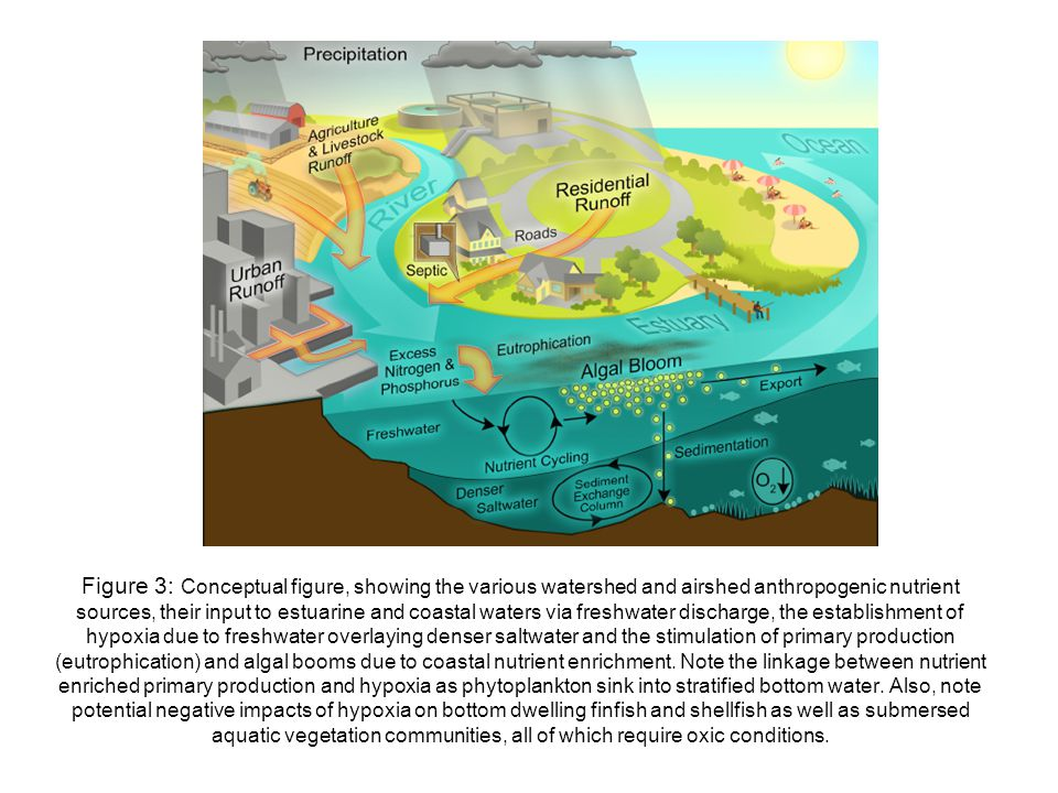 Figure 3: Conceptual figure, showing the various watershed and airshed anthropogenic nutrient sources, their input to estuarine and coastal waters via freshwater discharge, the establishment of hypoxia due to freshwater overlaying denser saltwater and the stimulation of primary production (eutrophication) and algal booms due to coastal nutrient enrichment.