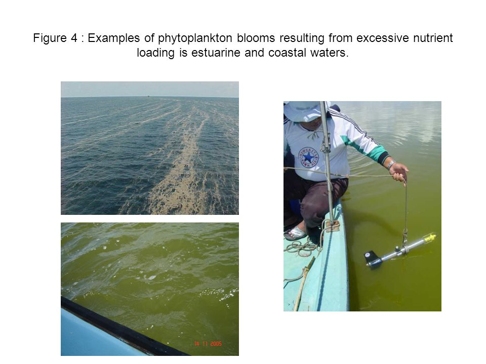 Figure 4 : Examples of phytoplankton blooms resulting from excessive nutrient loading is estuarine and coastal waters.