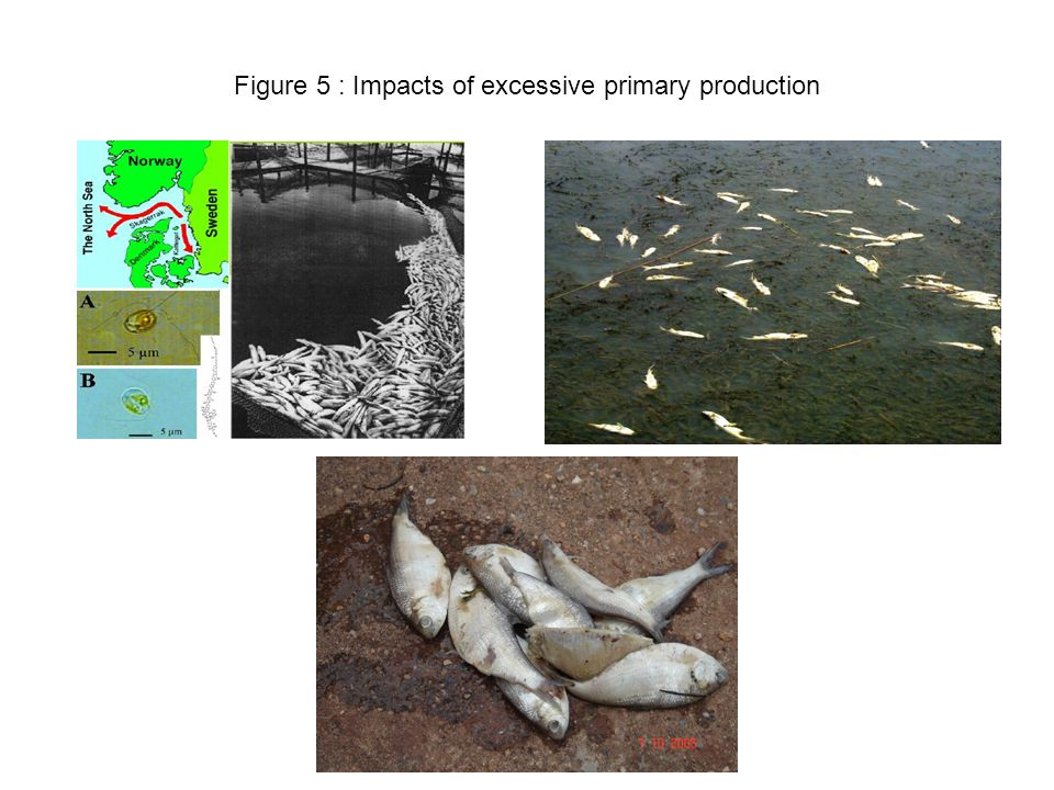 Figure 5 : Impacts of excessive primary production