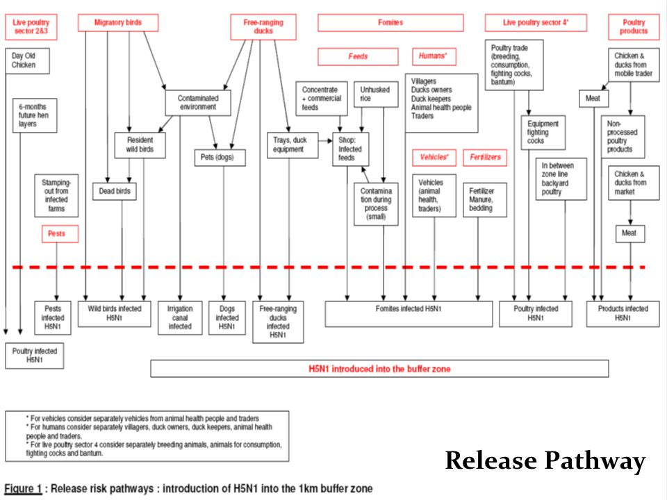 Release Pathway