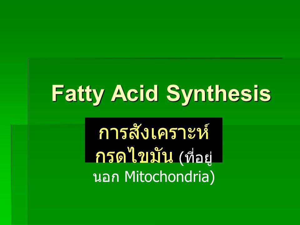 การสังเคราะห์กรดไขมัน (ที่อยู่นอก Mitochondria)