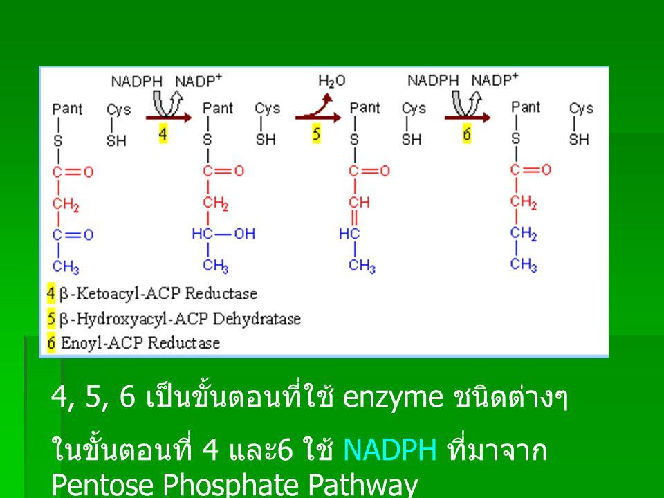 4, 5, 6 เป็นขั้นตอนที่ใช้ enzyme ชนิดต่างๆ