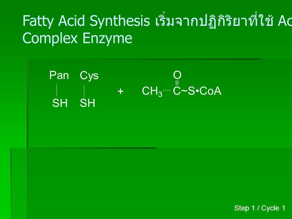 Fatty Acid Synthesis เริ่มจากปฏิกิริยาที่ใช้ Acetyl-CoA รวมกับ
