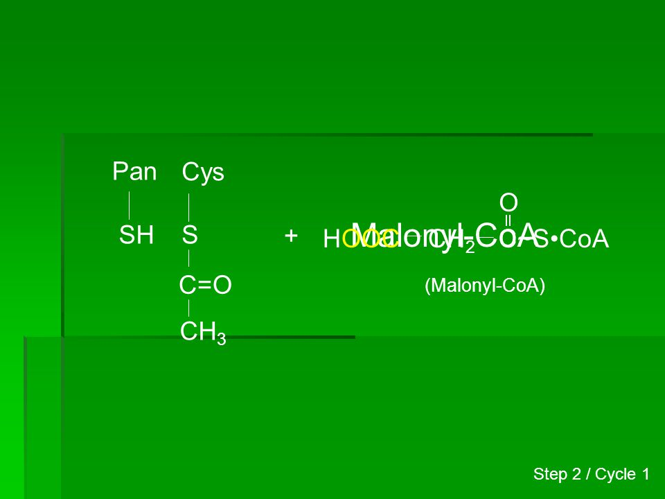 Malonyl-CoA Pan Cys O SH S + HOOC CH2 C~S•CoA C=O CH3 (Malonyl-CoA)