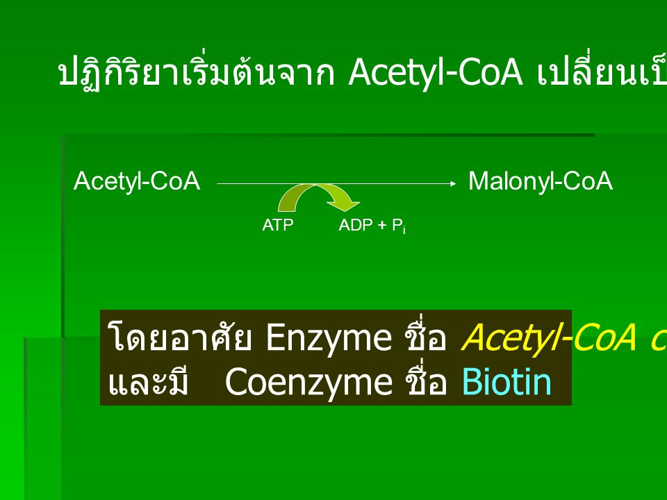 ปฏิกิริยาเริ่มต้นจาก Acetyl-CoA เปลี่ยนเป็น Malonyl-CoA