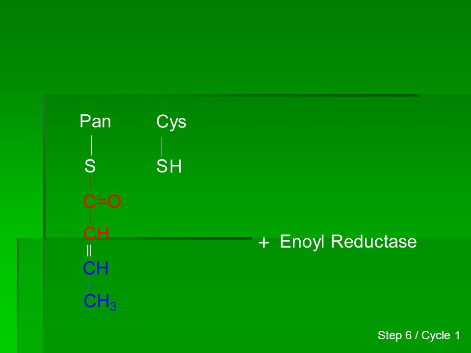Pan Cys S S H C=O CH + Enoyl Reductase CH CH3 Step 6 / Cycle 1