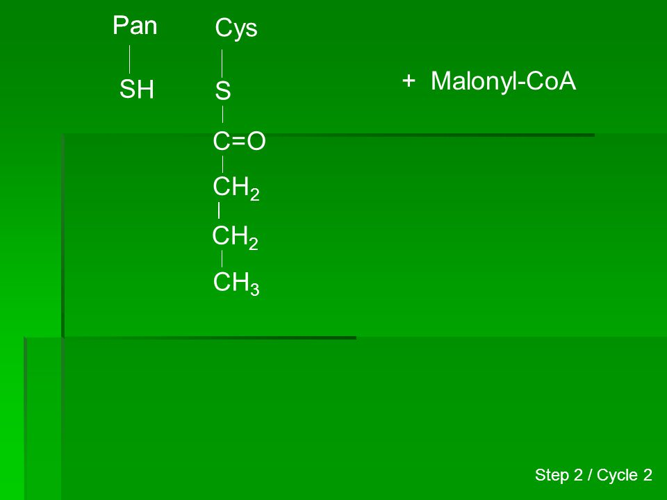 Pan H S Cys S CH2 CH3 C=O + Malonyl-CoA Step 2 / Cycle 2