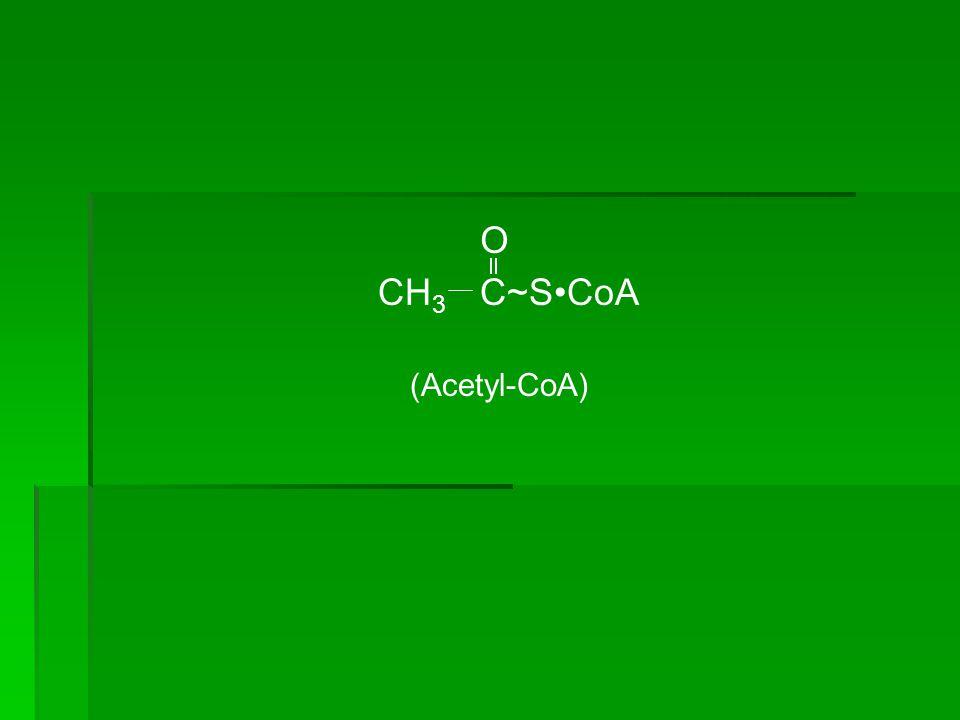 O CH3 C~S•CoA (Acetyl-CoA)