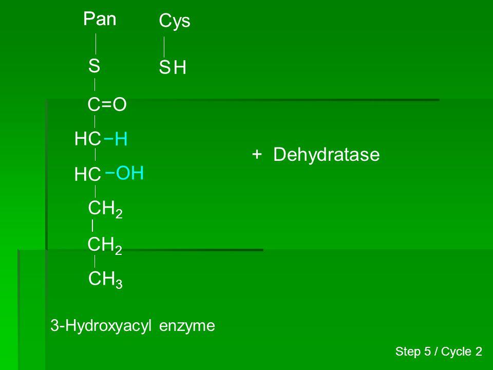 Pan Pan Cys S S H C=O HC −H + Dehydratase HC −OH CH2 CH2 CH3
