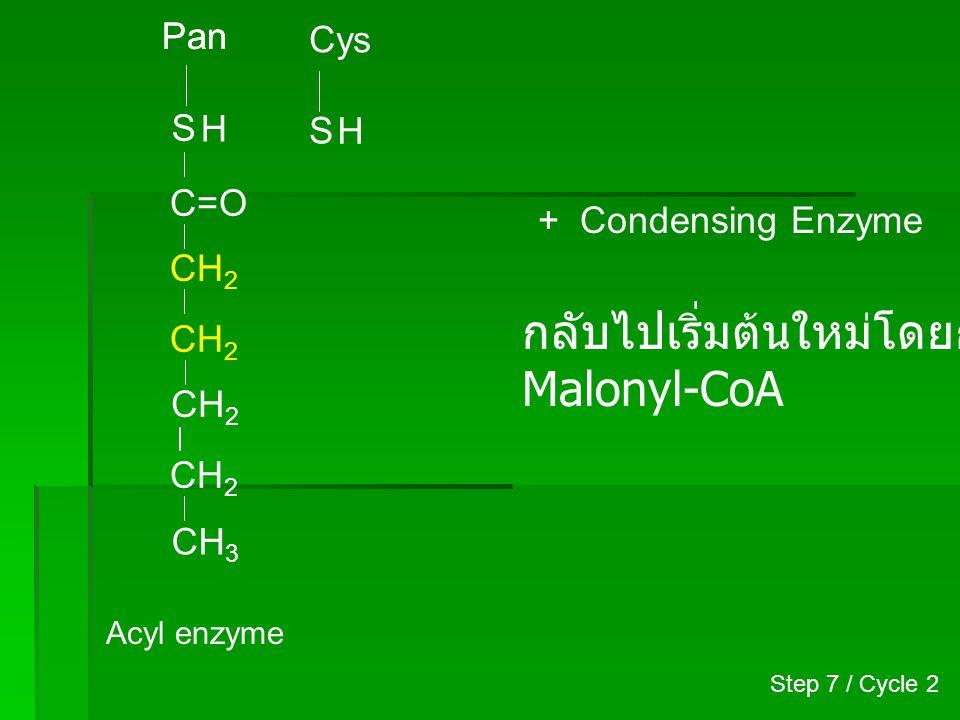 กลับไปเริ่มต้นใหม่โดยการเติม Malonyl-CoA