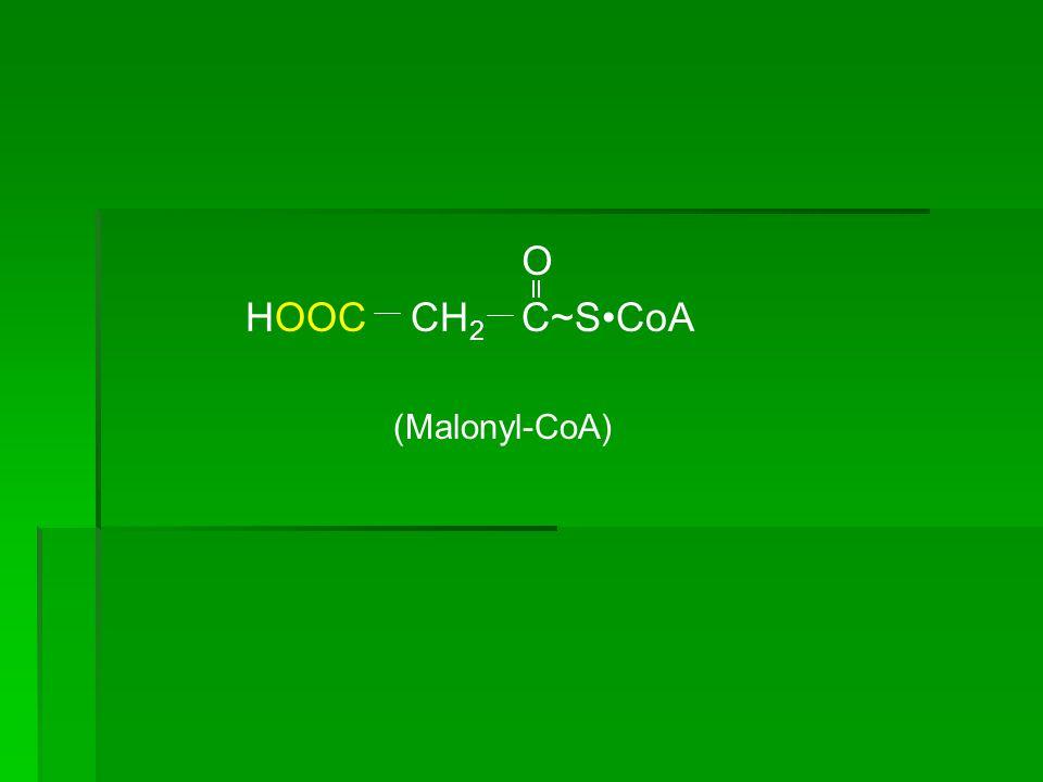 O HOOC CH2 C~S•CoA (Malonyl-CoA)