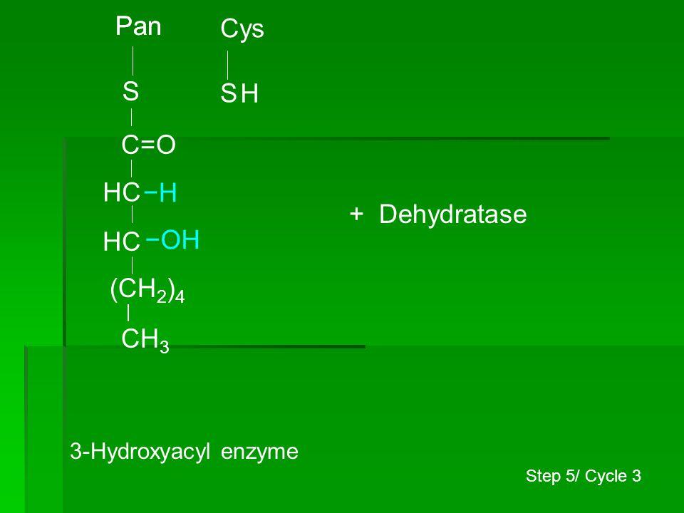 Pan Pan Cys S S H C=O HC −H + Dehydratase HC −OH (CH2)4 CH3