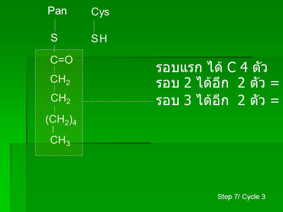 รอบแรก ได้ C 4 ตัว รอบ 2 ได้อีก 2 ตัว = C 6 ตัว