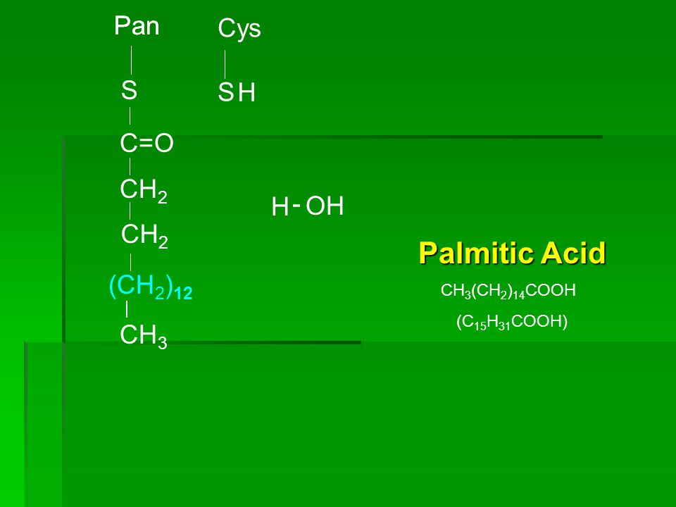 Palmitic Acid Pan Pan Cys S S H CH3 (CH2)12 C=O CH2 H - OH