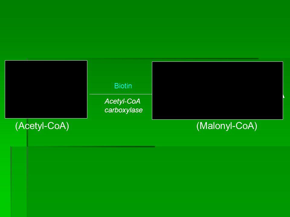 O O CH3 C~S•CoA HOOC CH2 C~S•CoA (Acetyl-CoA) (Malonyl-CoA) Biotin