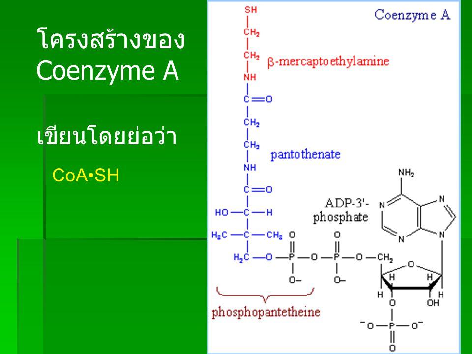 โครงสร้างของ Coenzyme A เขียนโดยย่อว่า CoA•SH