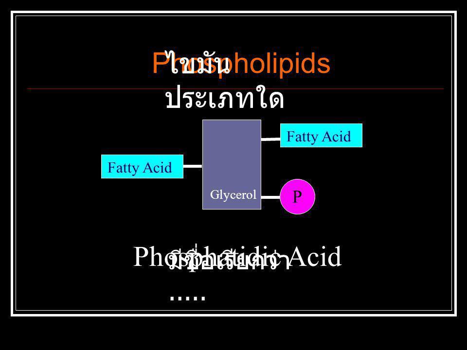 Phospholipids ไขมันประเภทใด Phosphatidic Acid มีชื่อเรียกว่า..... P
