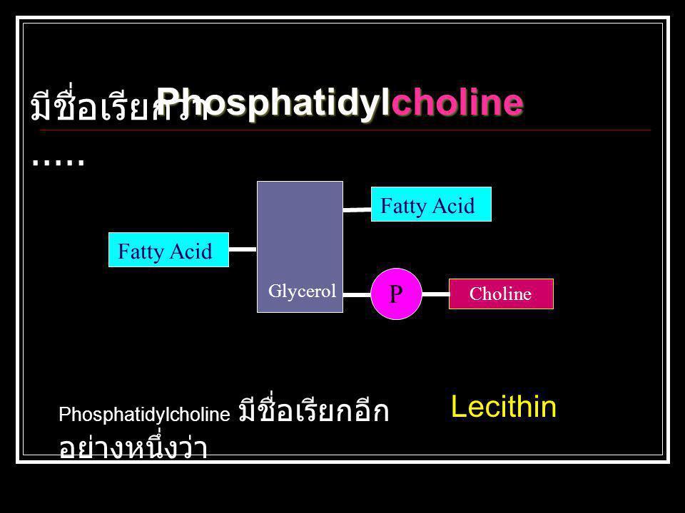 Phosphatidylcholine มีชื่อเรียกว่า..... Lecithin P Fatty Acid