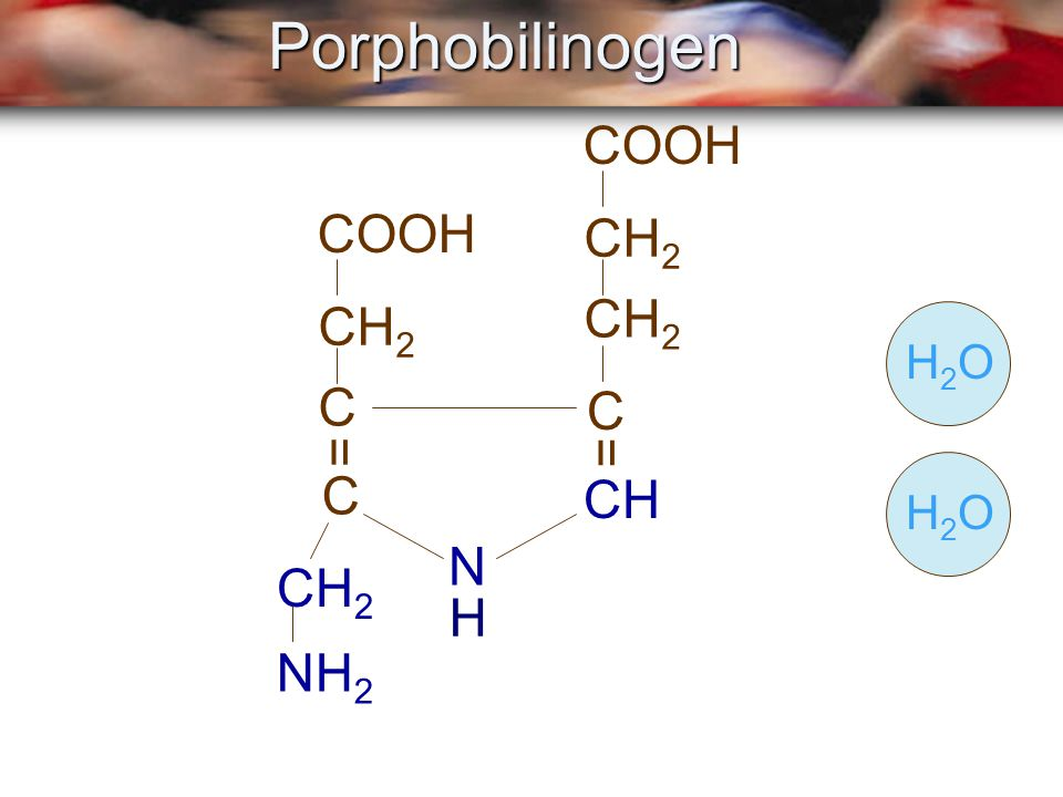 Porphobilinogen COOH COOH CH2 CH2 CH2 H2O C C = = C H2O CH N CH2 H NH2