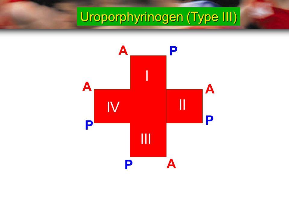 Uroporphyrinogen (Type III)