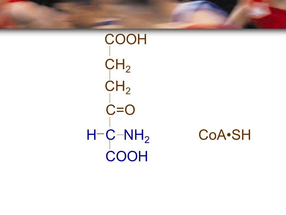 COOH CH2 CH2 C=O H C NH2 CoA•SH COOH