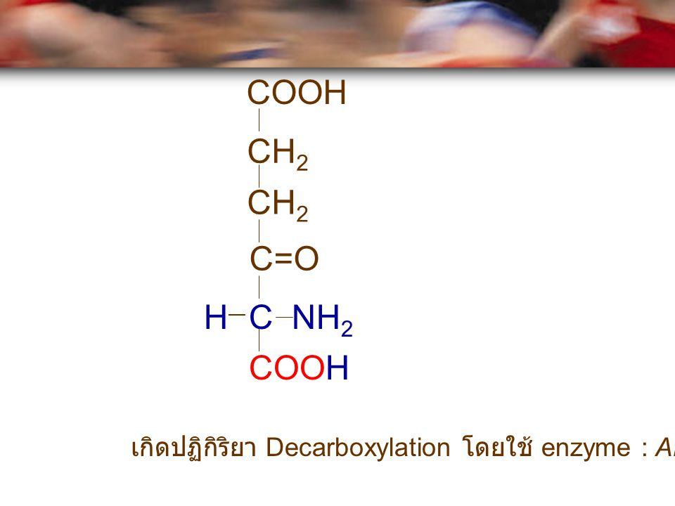 COOH CH2 CH2 C=O H C NH2 COOH เกิดปฏิกิริยา Decarboxylation โดยใช้ enzyme : ALA synthase