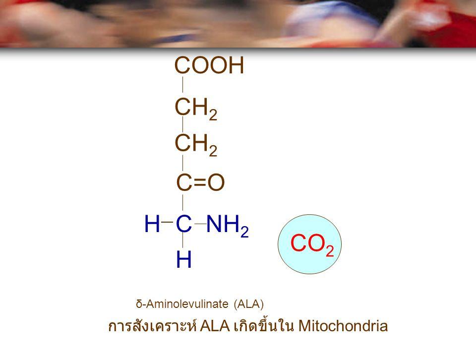 COOH CH2 CH2 C=O H C NH2 CO2 H δ-Aminolevulinate (ALA) การสังเคราะห์ ALA เกิดขึ้นใน Mitochondria