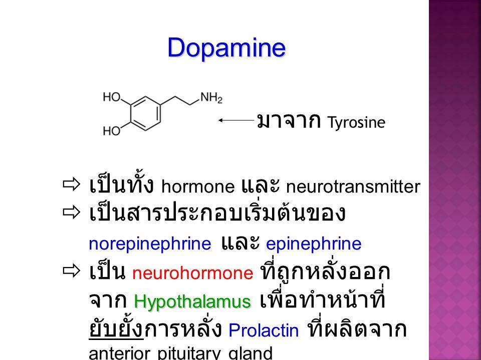 Dopamine มาจาก Tyrosine เป็นทั้ง hormone และ neurotransmitter