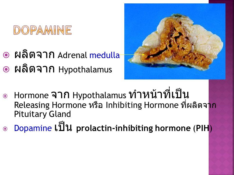 Dopamine ผลิตจาก Adrenal medulla ผลิตจาก Hypothalamus