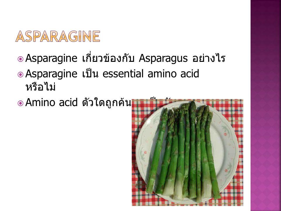 Asparagine Asparagine เกี่ยวข้องกับ Asparagus อย่างไร