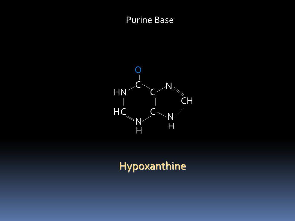 Purine Base O C N HN C CH H C C N N H H Hypoxanthine