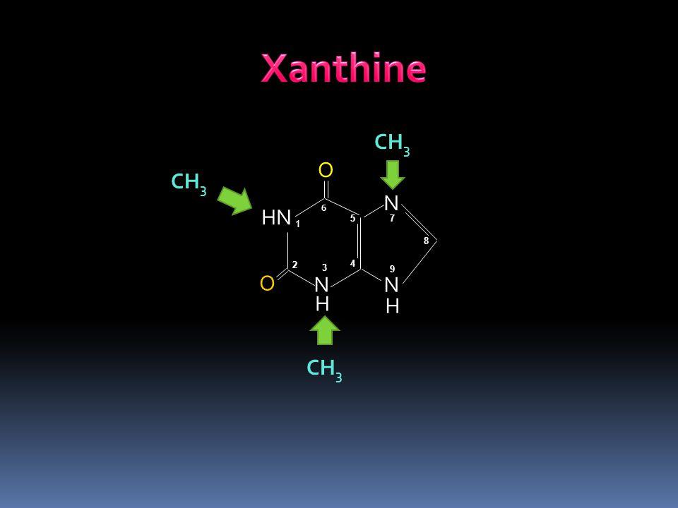 Xanthine CH3 O CH3 N HN 6 5 7 1 8 2 4 3 9 O N N H H CH3