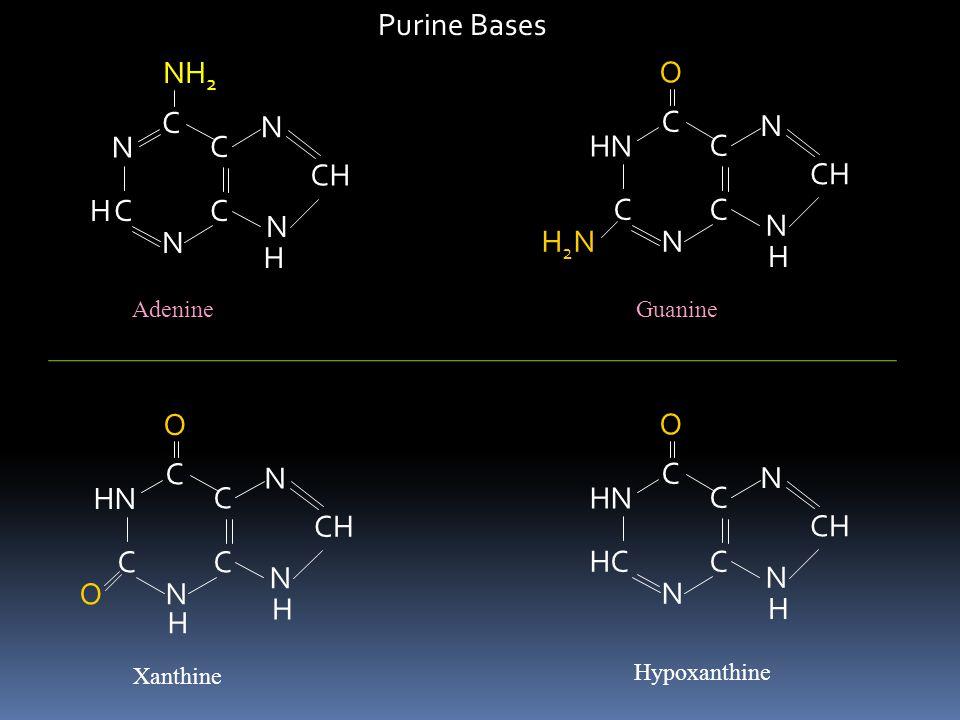 Purine Bases C N CH NH2 H C HN N CH H2N O C HN N CH O C HN HC N CH O H