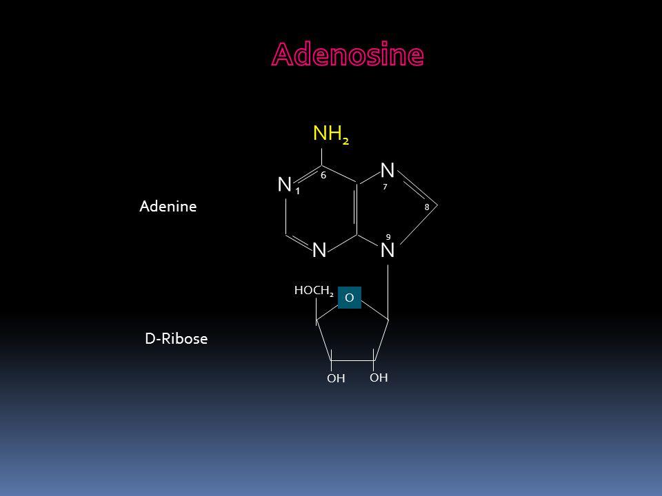 Adenosine NH2 N N 6 7 1 Adenine 8 9 N N HOCH2 O D-Ribose OH OH