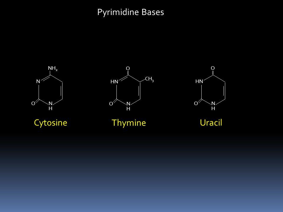 Pyrimidine Bases Cytosine Thymine Uracil N NH2 H O HN N O H CH3 HN N O