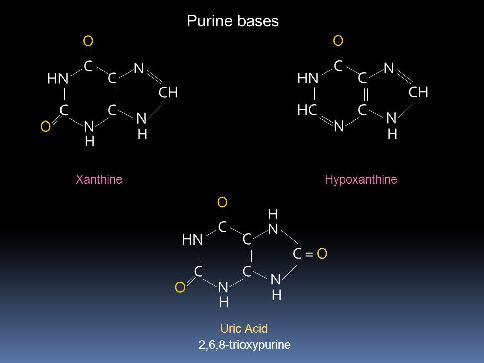 Purine bases C HN N CH O C HN HC N CH O C HN N C = O O H H Xanthine