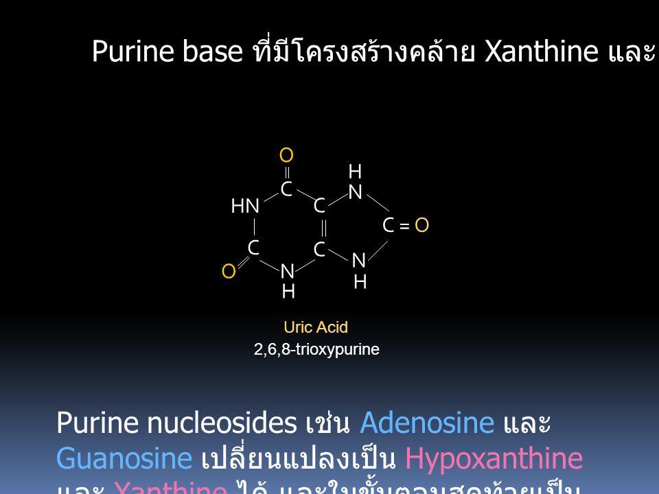 Purine base ที่มีโครงสร้างคล้าย Xanthine และ Hypoxanthine