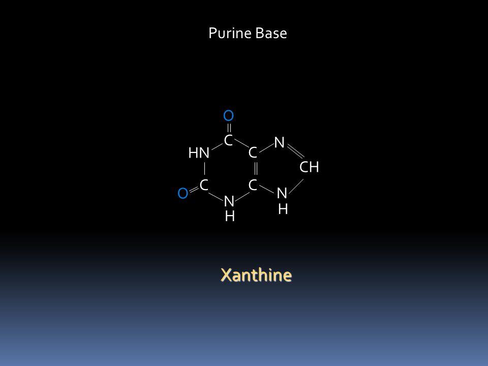Purine Base O C N HN C CH C C O N N H H Xanthine
