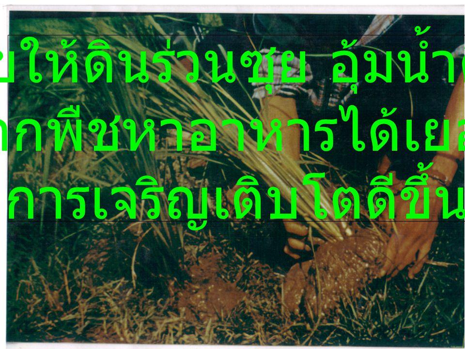 *ช่วยให้ดินร่วนซุย อุ้มน้ำดีขึ้น รากพืชหาอาหารได้เยอะ