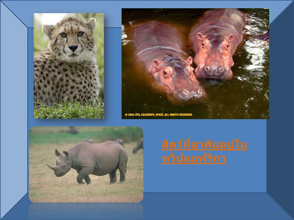 สัตว์ที่อาศัยอยู่ในทวีปแอฟริกา
